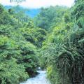 The nature of Sulawesi will surpise you